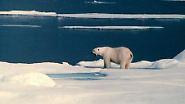 Wenn das Packeis schmilzt: Der Eisbär in höchster Gefahr
