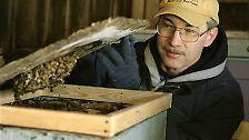 Zahlreiche Imker in den USA konnten ihren Augen nicht trauen, als sie nach dem Winter ihre Bienenstöcke öffneten und ins Leere starrten.