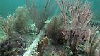 Doch die Klimaveränderungen sind nur eine drohende Gefahr. Bei der Fischerei mit Schleppnetzen werden die Korallenstöcke einfach zerstört.