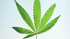 Rauchen, saufen, spritzen: Die Welt der Drogen