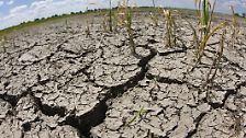 Es ist eine weltweite Katastrophe: Pflanzen und Wasser verschwinden, die Böden werden fortgespült oder fortgeweht, versalzen oder versanden. Das Land wird unfruchtbar.