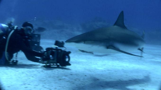 Haie mögen keine Menschen.