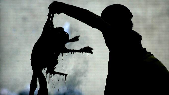 In den Jahren 2005 und 2006 sorgte das Vogelgrippevirus weltweit für Besorgnis.