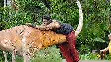 Joey Heindle holt die Krone: So schön war's im Dschungelcamp