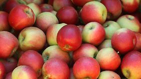 Ein Apfel ist in zehn Sekunden gewaschen. Er sollte mit Schale gegessen werden und gehört zu den Minutenrezepten bei Strunz.
