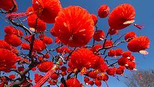 Neujahrsfest in China: Jahr der Schlange bringt Feuer und Wasser