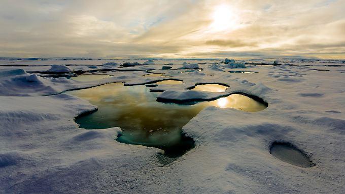 Ein Schmelztümpel im arktischen Meereis lässt Sonnenlicht an die Unterseite der Scholle gelangen.