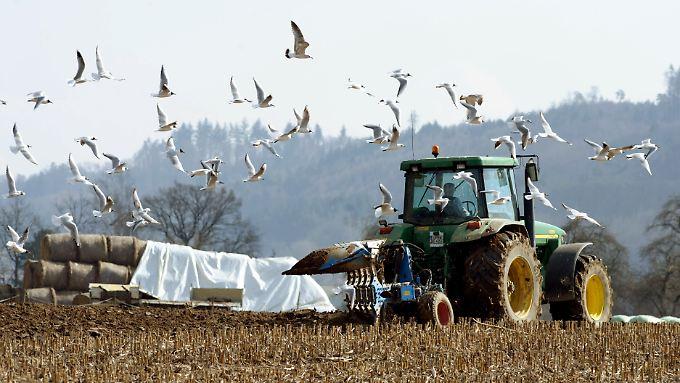 Das Pflügen zählt im Frühjahr zu den Vorbereitungen der Feldbestellung vor der Aussaat, um unter anderem den Boden mit Sauerstoff anzureichern.