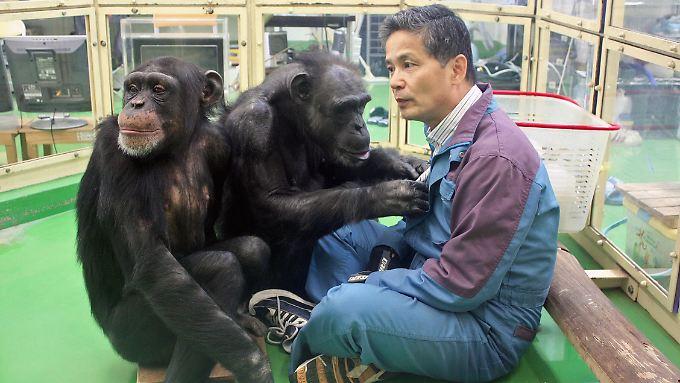 Schimpansen-Forscher Tetsuro Matsuzawa in einem Gehege des Primate Research Institute in Inuyama.