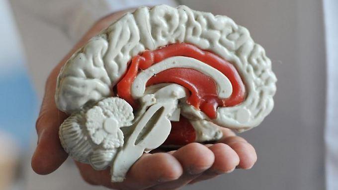 Schmerzsignale können im Gehirn lokalisiert und sichtbar gemacht werden.