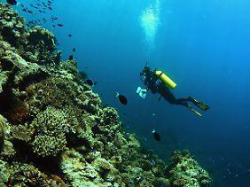 Scott Reef vor der westaustralischen Küste.