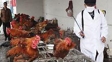 Behörden rufen Alarm aus: Vogelgrippe erreicht Hongkong