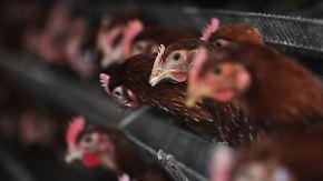 Vogelgrippe in China: Neue Ansteckungsfälle gemeldet