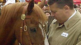Falsch deklariertes Pferdefleisch: Skandal trifft 124 deutsche Betriebe