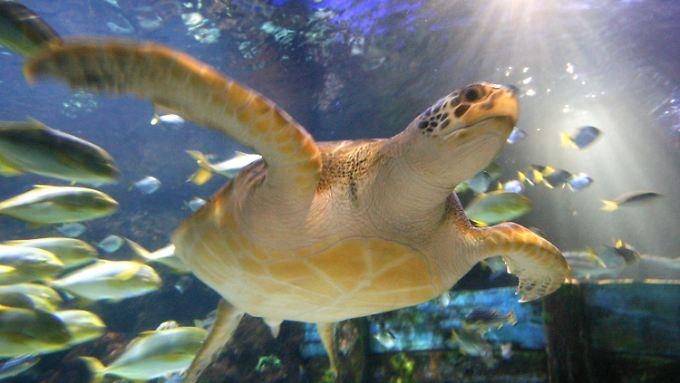Schildkröten sind ganz ungewöhnliche Lebewesen.