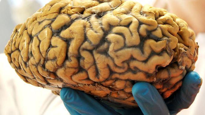 Erfahrungen formen das Hirn von Mäusen - und wahrscheinlich auch das des Menschen.