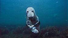 Denn zerstört der Mensch weiterhin die empfindliche Welt der Meere, die immerhin Zweidrittel der Erdoberfläche ausmachen, dann gräbt er sich ein eigenes Grab.