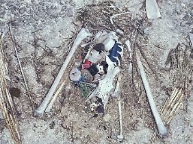 Fische und Vögel, hier ein Albatros, verwechseln das Plastik mit Nahrung und sterben qualvoll.