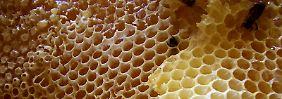 Je älter das Bienenwachs, umso dunkler ist es.