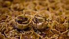 Zum Beispiel Mealworm-Quiches oder Heuschrecken-Frühlingsrollen?
