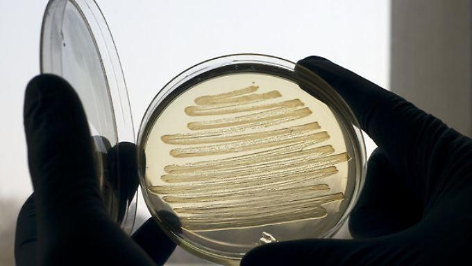Bislang wird der Magenkeim erfolgreich mit Antibiotika bekämpft.