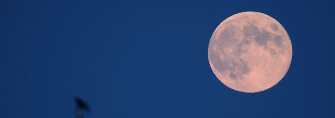 Ist im Sonnensystem nur ein Trabant von vielen: der Erdmond.