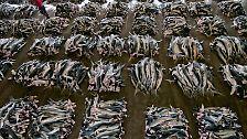 Wer jagt wen?: Haie - der Mythos vom Monster