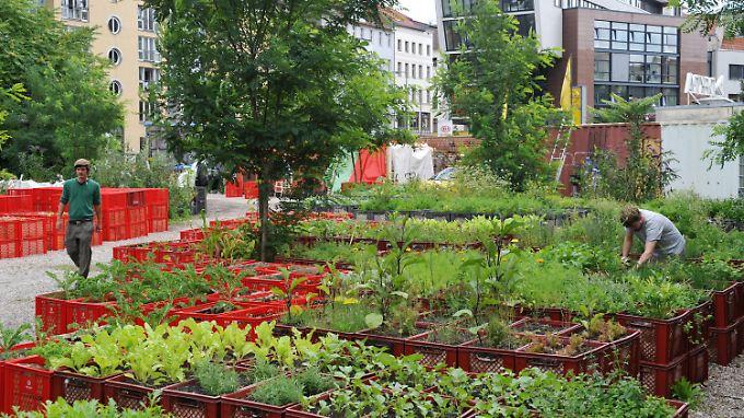 Die Prinzessinnengärten in Berlin sind nur ein Beispiel für den Trend zum Urban Gardening.