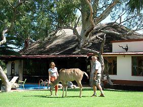 """Andreas und Christina Werner mit dem Kudu """"Kambi"""" auf ihrer Gästefarm """"Elisenheim"""" bei Windhuk."""