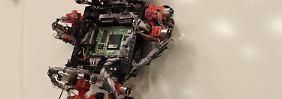 Immer an der Wand lang: Roboter klettern wie Geckos