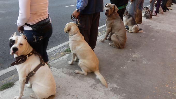 Manche Viren-Wachhunde sind aufmerksamer als andere.