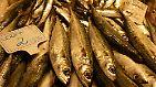 Bestände zu 90 Prozent erschöpft: Welchen Fisch man noch essen darf