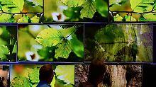 Den Wald vor lauter Bäumen sieht man manchmal beim Blick insEinstellungsmenü des Fernsehers nicht mehr. Experten raten aber, die Optionen in Ruhe durchzuprobieren.