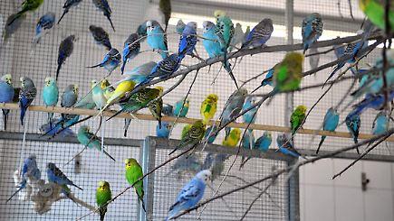 Zu viele tiere in der wohnung beh rden tun zu wenig gegen for Viele fliegen in der wohnung