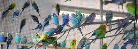 Zu viele Tiere in der Wohnung: Behörden tun zu wenig gegen Tierhortung
