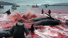 """Internationaler Gerichtshof sieht keinen """"Forschungszweck"""": Japan darf keine Wale mehr fangen"""