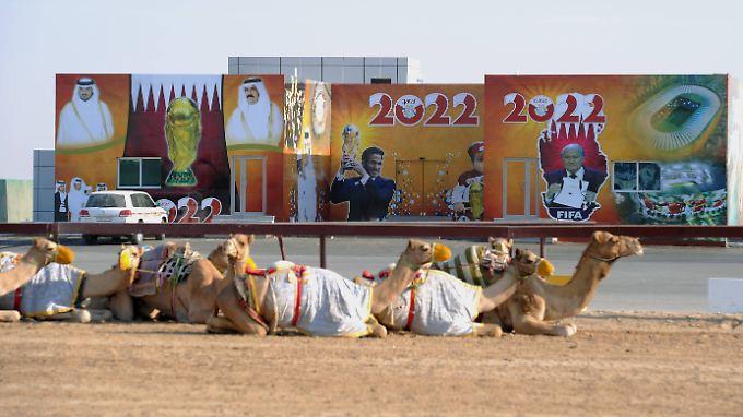 Ganz schön heiß hier ... selbst die Dromedare machen in Katar lieber halblang.
