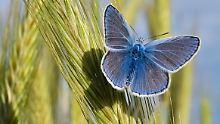 Der Klimawandel könnte die Farbenvielfalt der Insekten in Europa beeinflussen.