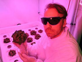Daniel Schubert mit einem der Salatköpfe. Das Ziel der Forschungsarbeit ist es, ressourcenschonende Gewächshäuser für das Weltall zu entwickeln.