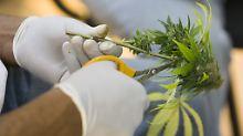Deutschland diskutiert den Einsatz von Cannabis-Medikamenten bei Schwerstkranken.