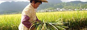 Sinkenden Lebensmittelpreise: UN nimmt Sorge vor Hungersnot