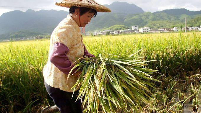 In den Entwicklungsländern gehe ein Drittel des Ertrags nach der Ernte verloren, monieren die UN.