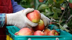 Russischer Importstopp: Deutsche Bauern sind trotz guter Ernte besorgt