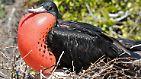 """Labor des Lebens"": Galápagos - Naturwunder im Pazifik"