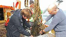 Tödliche Fallen in der Ostsee: Eine Tonne Geisternetze von Wracks geholt