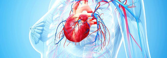 Mit der neuen Methode könnten bis zu 30 Prozent mehr Herztransplantationen durchgeführt werden.