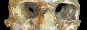 Uralter Knochenfund aus Russland: Fossil zeigt Herkunft der Europäer