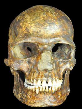 """Schädel des etwa 37.000 Jahre alten in Kostenki gefundenen Fossils """"K 14""""."""