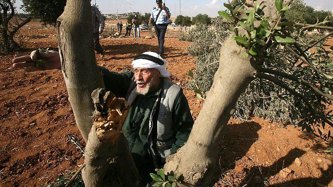Der israelische Siedlungsbau erschwert palästinensischen Bauern den Zugang zu ihren Olivenfeldern.