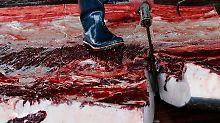 Plan für reduziertes Fangprogramm: Japan will wieder Wale in der Antarktis jagen